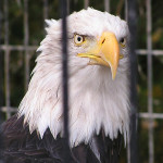 Alaska Zoo 2011 by TVS
