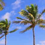 Florida 2012 by TVS