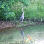 New Jersey- Tinton Falls, Sit Still by TVS