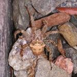 Spider 2013 by TVS