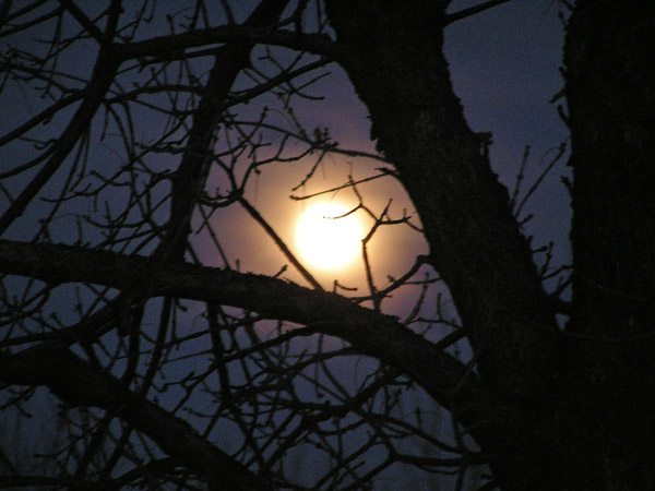 Moon Through Trees by TVS