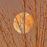 Trees and Moon 1 by TVS